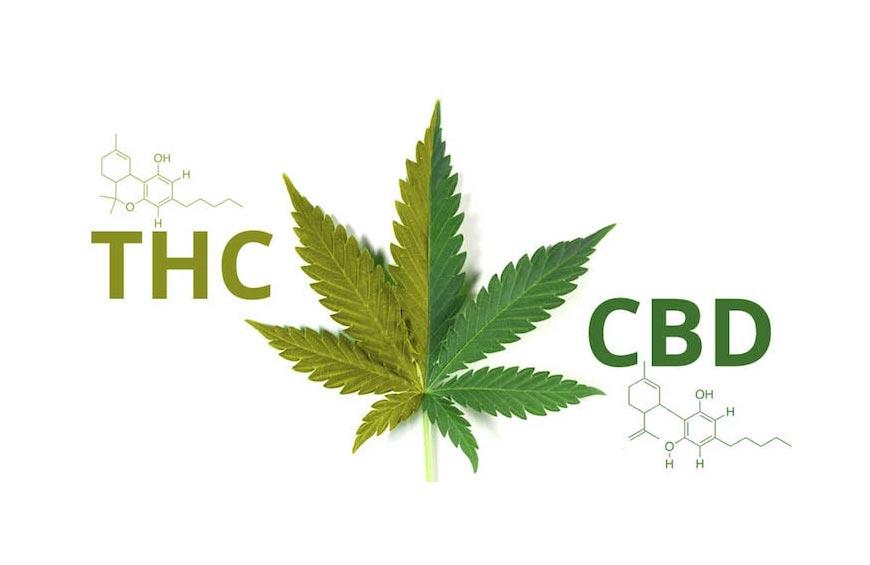 Κανναβιδιόλη (CBD) VS Τετραϋδροκανναβινόλη (THC): Οι Διαφορές